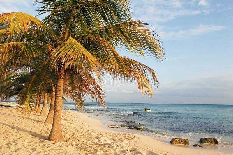Praia da palmeira fotografia de stock