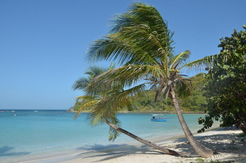 Praia das caraíbas com palmas de inclinação e o barco de pesca azul foto de stock royalty free