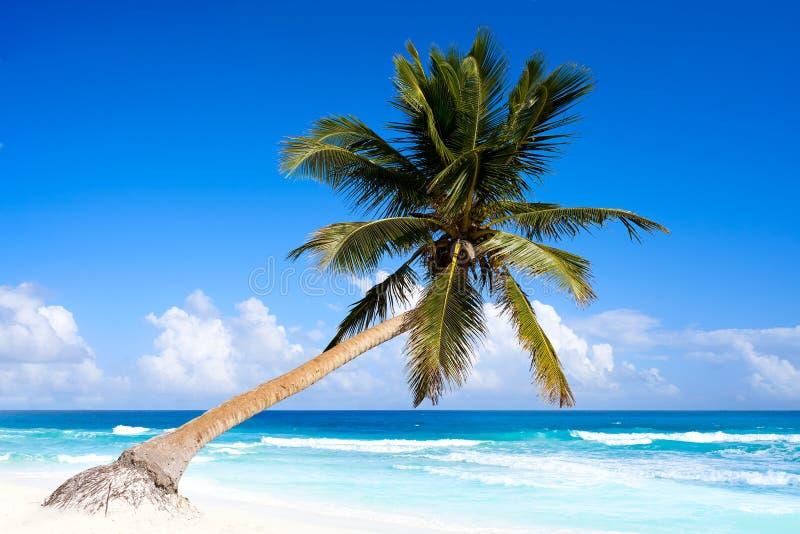 Praia das caraíbas de Tulum no Maya de Riviera foto de stock royalty free