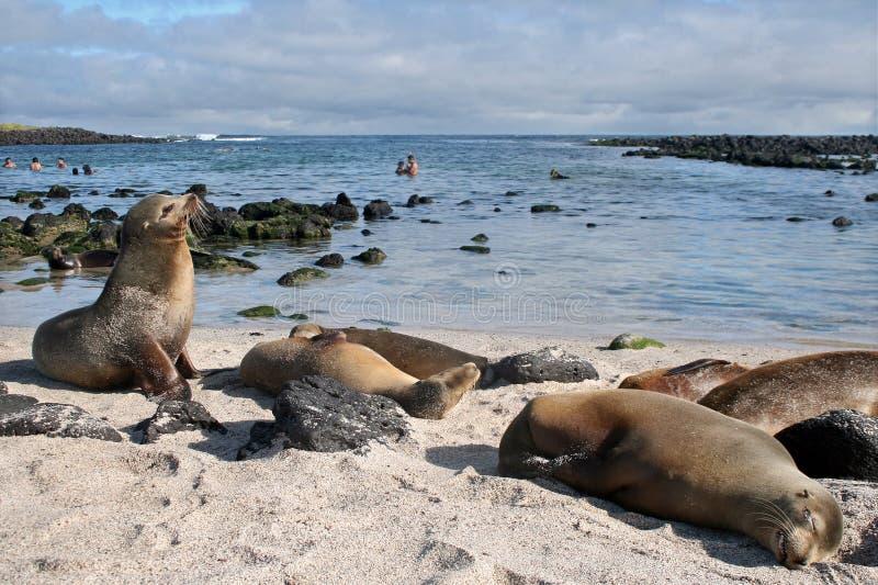 Praia das Ilhas Galápagos fotos de stock royalty free