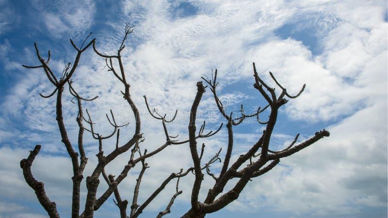 Praia de Airlie, Queensland imagens de stock royalty free