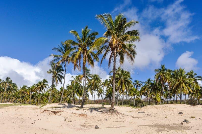 A praia de Anakena na Ilha de Páscoa, o Chile imagens de stock