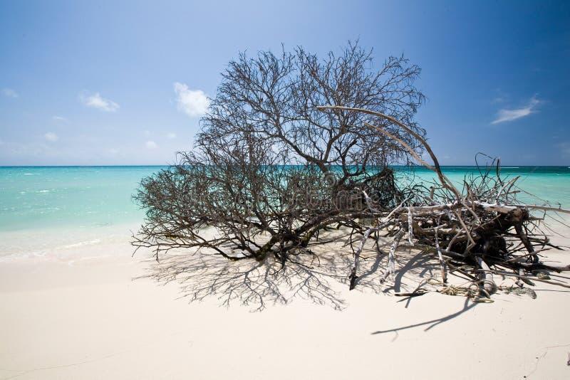 Praia de Anegada imagens de stock royalty free