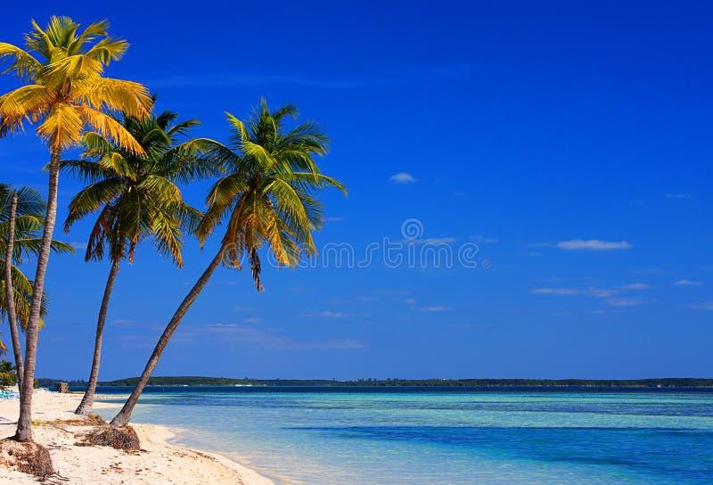 Praia de Bahamas fotografia de stock royalty free