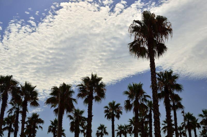 Praia de Barcelona das palmeiras, Espanha fotografia de stock