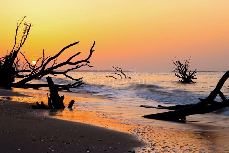 Praia de Boneyard da baía da Botânica, ilha de Edisto imagens de stock