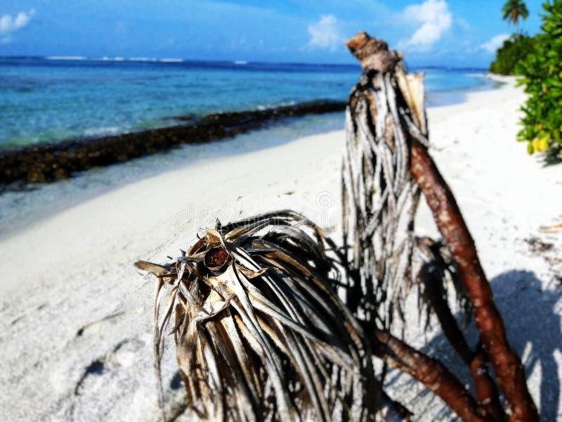 Praia de Maldivas foto de stock