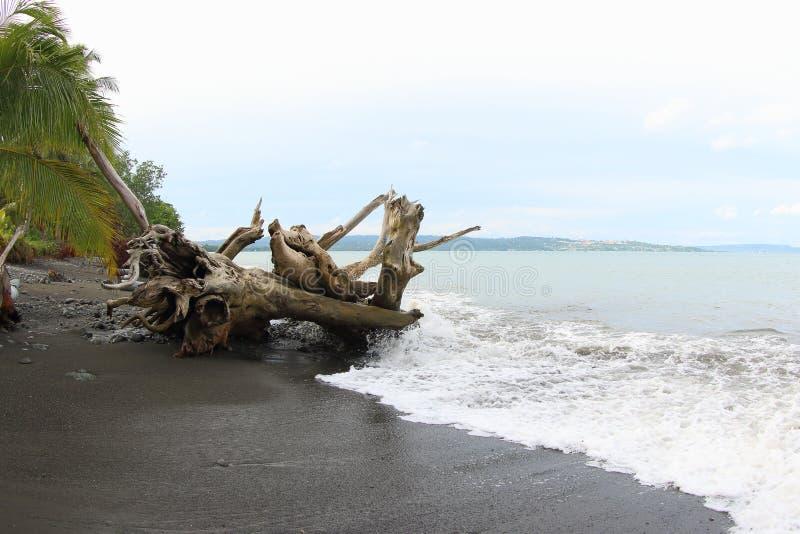 Praia de Maruni, Manokwari fotos de stock