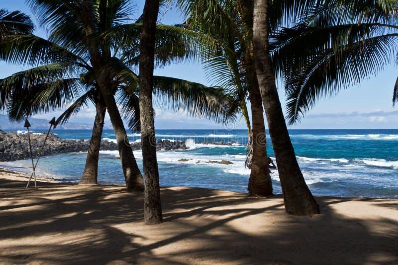 Praia de Maui com palmeiras fotografia de stock