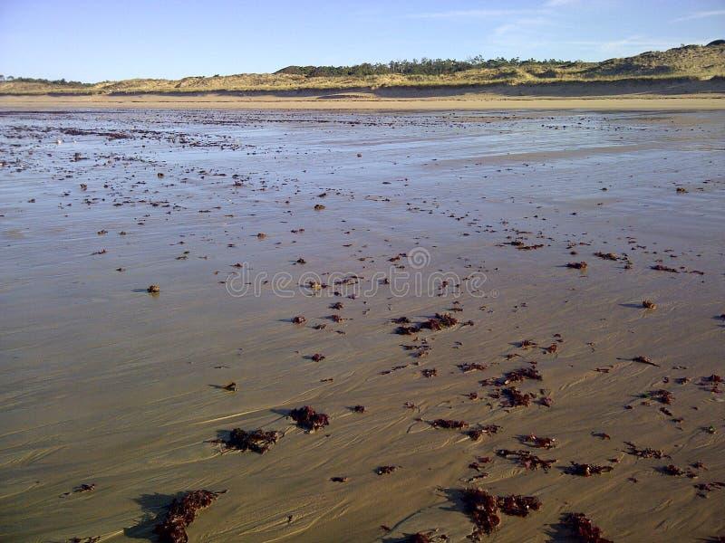 Praia de Oleron foto de stock
