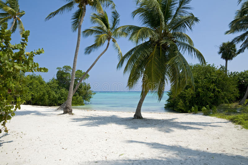 Praia de Punta Cana - República Dominicana imagens de stock