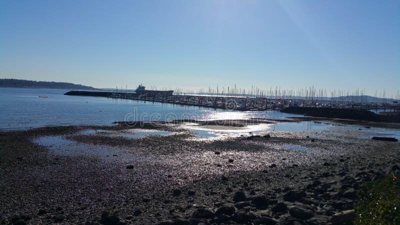 Praia de Seattle da maré baixa imagens de stock royalty free