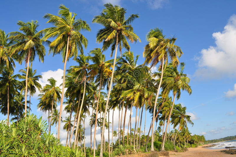 Praia de Sri Lanka fotos de stock
