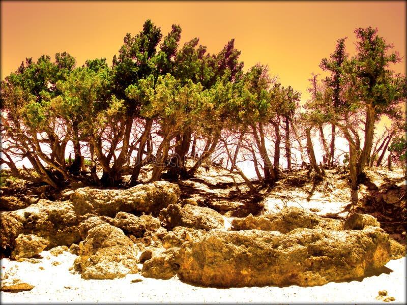 Praia de surpresa na qualidade fina do papel de parede do fundo de greece do chania dos kedrodasos imagem de stock royalty free