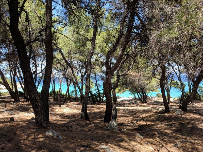 Praia de turquesa na floresta do grilo fotos de stock