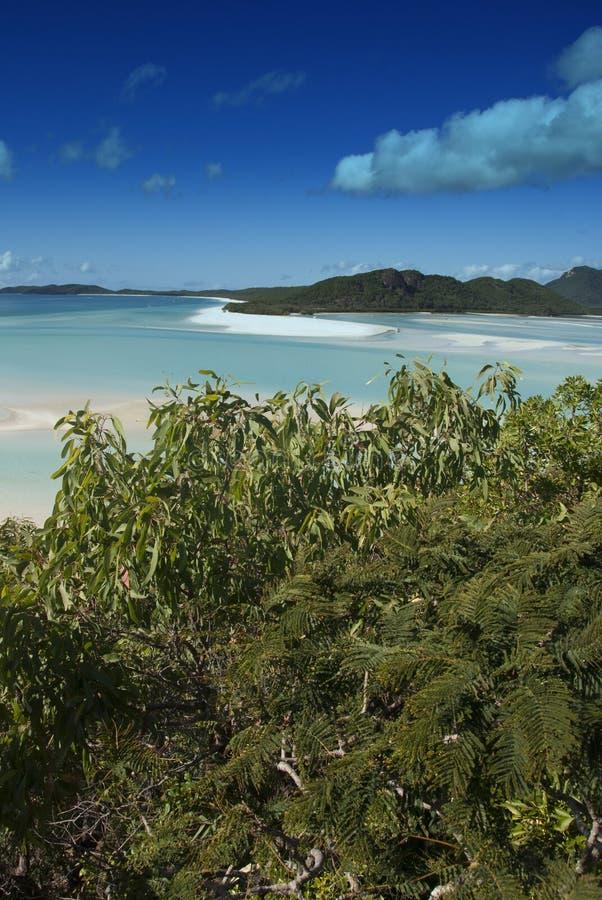 Praia de Whitehaven, Austrália foto de stock royalty free