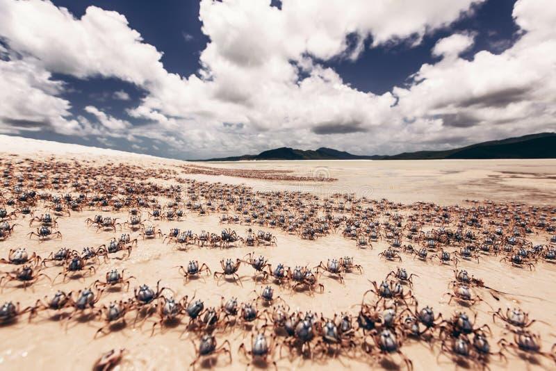 Praia de Whitehaven em Austrália foto de stock royalty free