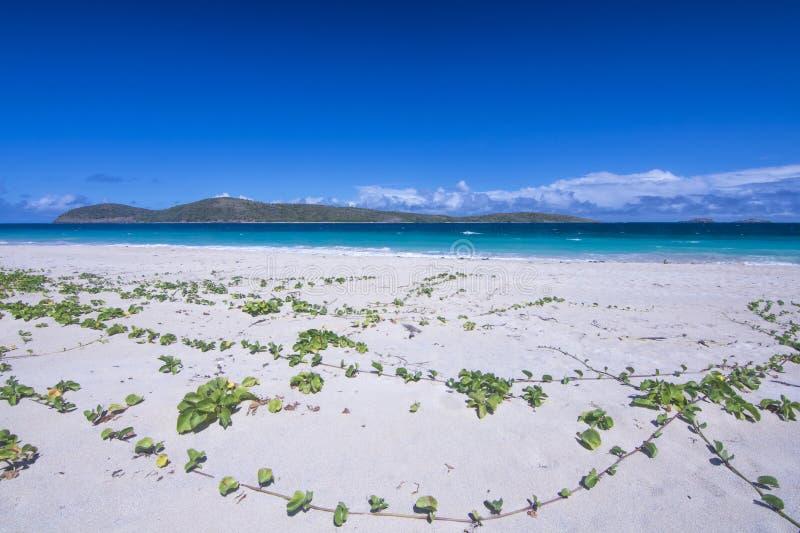 praia do Cararibe tropical imagens de stock royalty free