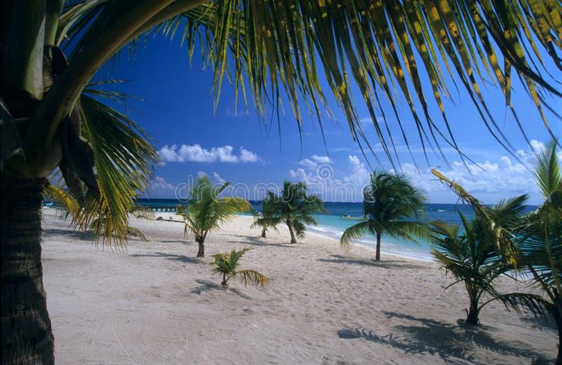 Praia do console de Saona - República Dominicana fotografia de stock royalty free