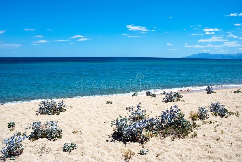 Praia do deserto foto de stock royalty free