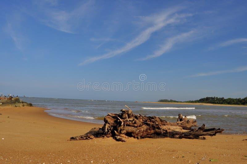 Praia do estuário do litoral com o céu em Sri Lanka imagens de stock royalty free