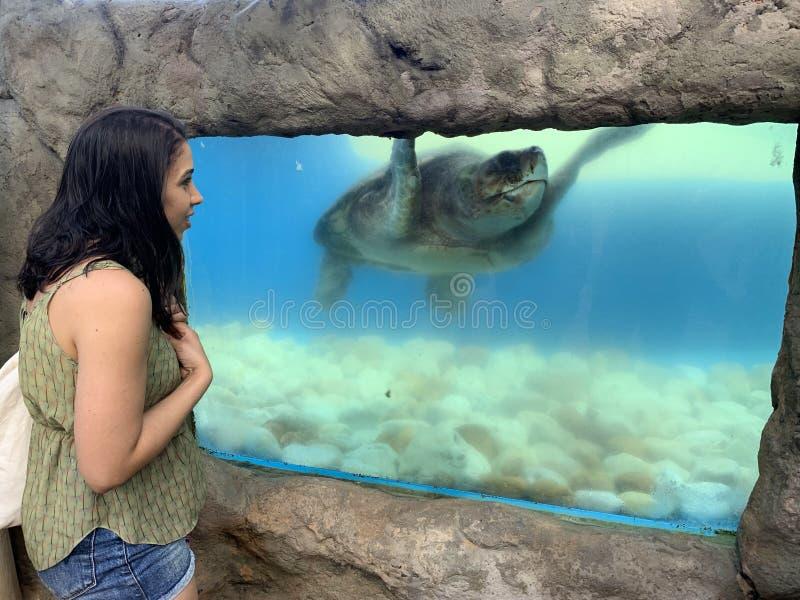 Sea turtles in the Tamar project aquarium. Praia do Forte- Bahia, sea turtles in the Tamar project aquarium stock photos