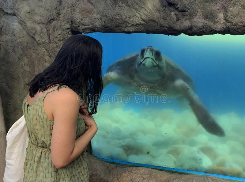 Sea turtles in the Tamar project aquarium. Praia do Forte- Bahia, sea turtles in the Tamar project aquarium stock photo
