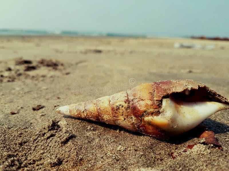 Praia do goa de Shell foto de stock royalty free