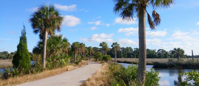 Praia do hernando de Florida: árvore fotografia de stock