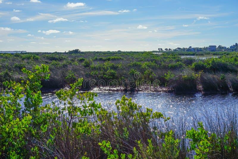 Download Praia Do Hernando De Florida: Lagoa Foto de Stock - Imagem de mergulho, clear: 80101588