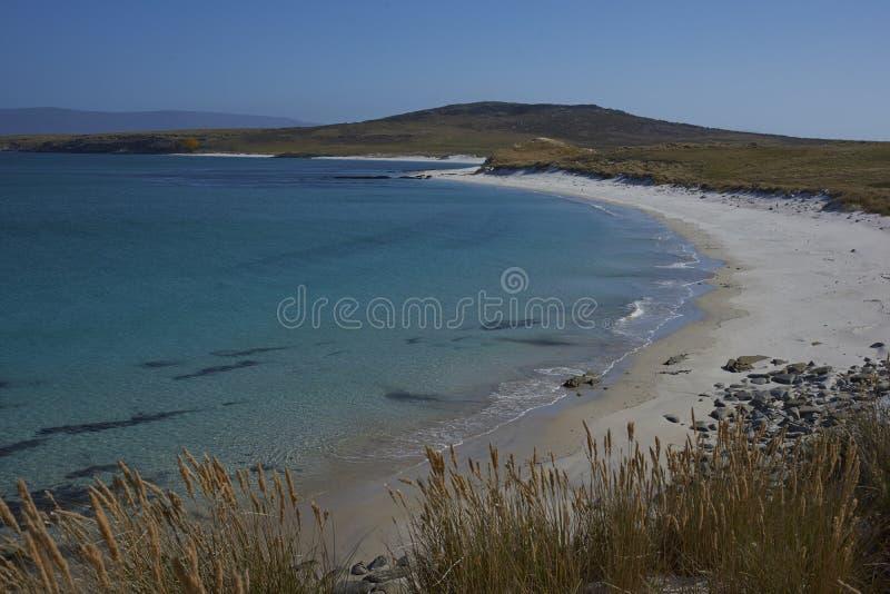 Praia do leopardo - Falkland Islands fotografia de stock