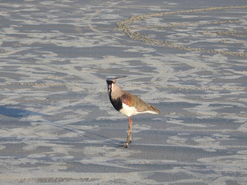 Praia do na de Pássaro foto de stock royalty free