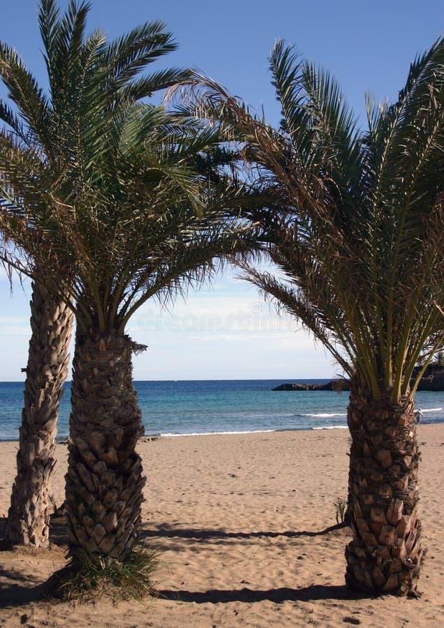 Download Praia do paraíso foto de stock. Imagem de areia, palma, spain - 50048
