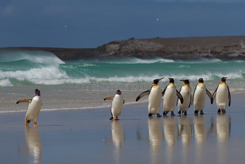 Praia do pinguim - Falkland Islands imagem de stock royalty free