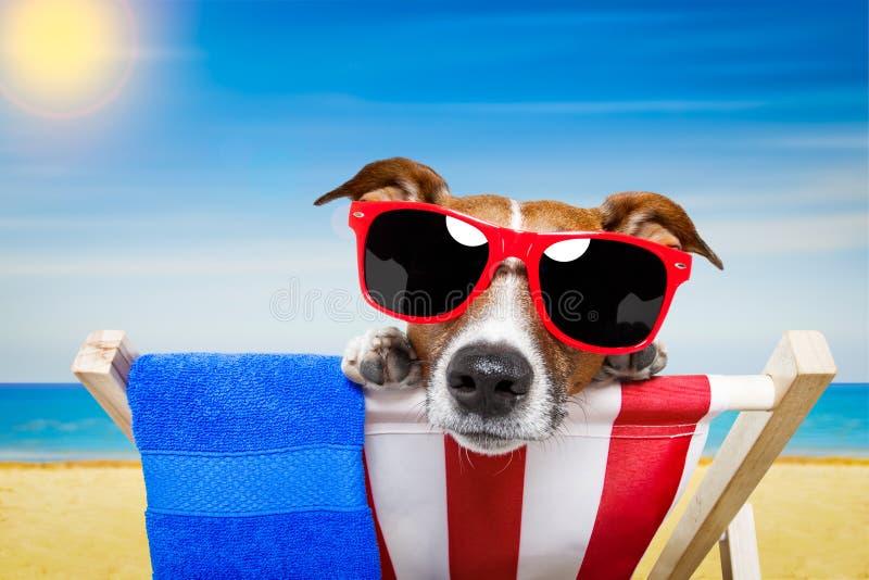 Praia do verão do cão fotografia de stock royalty free