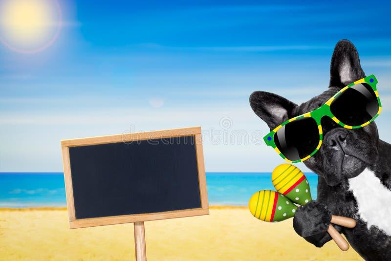 Praia do verão do cão imagem de stock royalty free