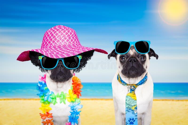 Praia do verão do cão dos pares fotografia de stock royalty free