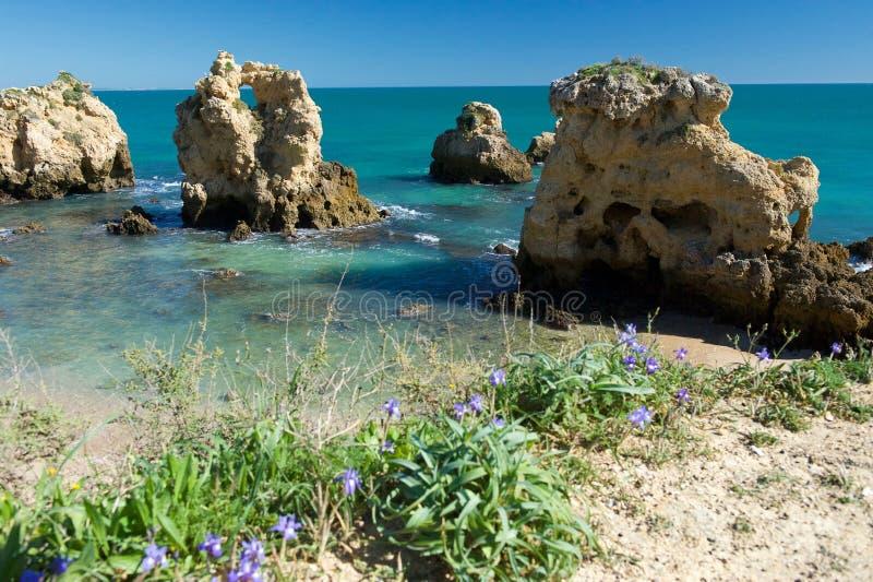 Praia dos Arrifes. Springtime blooming. stock photography