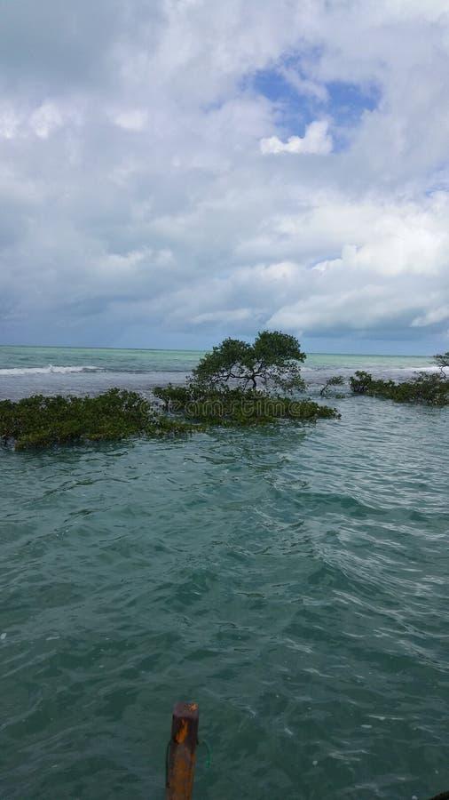 Praia-DOS Carneiros, natürliche Pools, Paradies in der Erde stockbilder