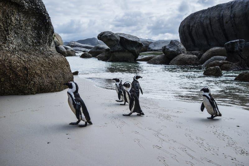 Praia dos pedregulhos de África do Sul foto de stock