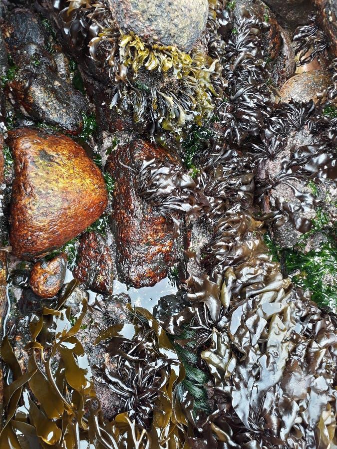 Praia e cores foto de stock