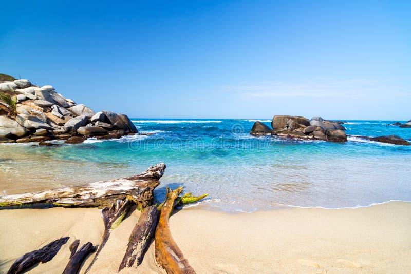 Praia e madeira lançada à costa imagens de stock royalty free