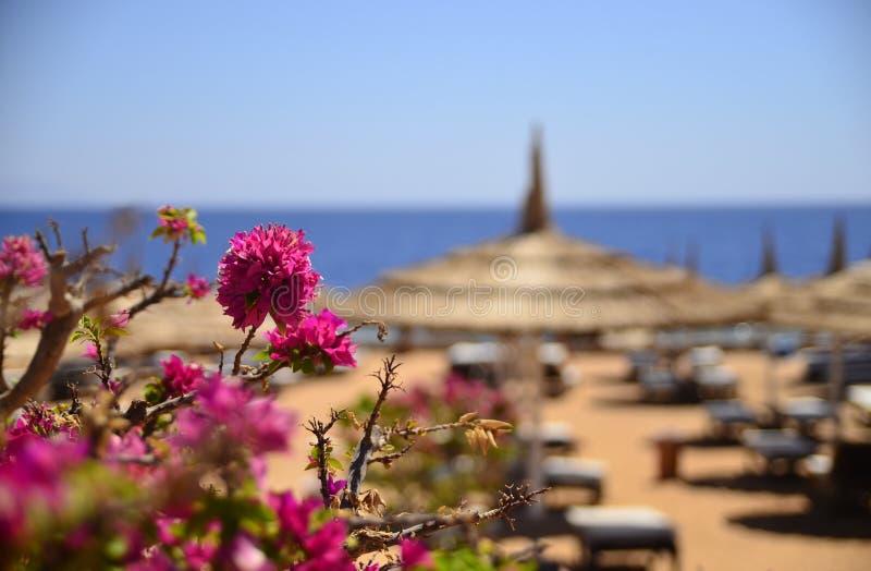 A praia e o mar imagem de stock royalty free