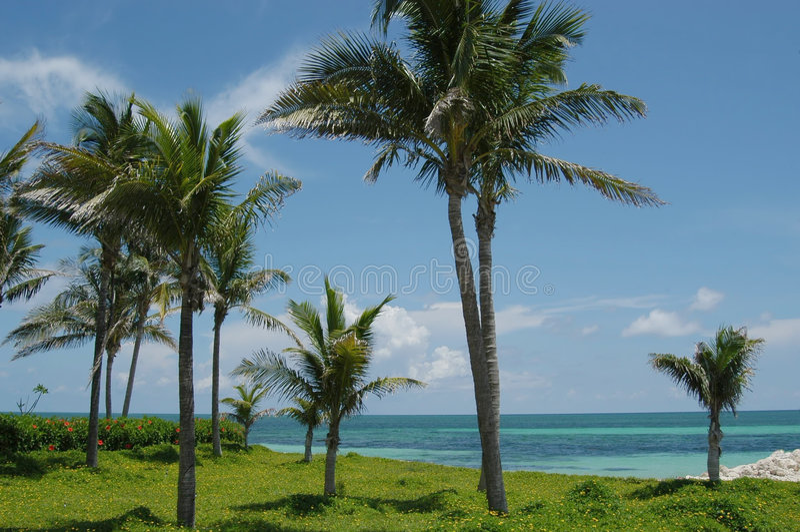 Praia e palmas imagens de stock royalty free