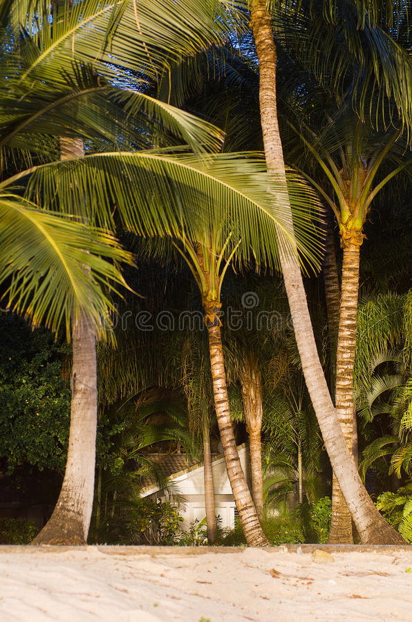 Praia e palmeiras foto de stock