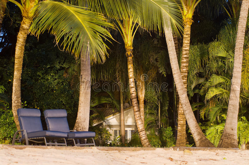 Praia e palmeiras fotografia de stock