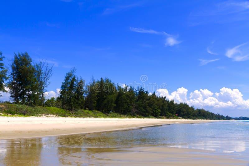 Praia e pinho de Krut da proibi??o da praia no sumer fotografia de stock royalty free
