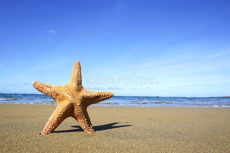Praia e Starfish fotografia de stock royalty free