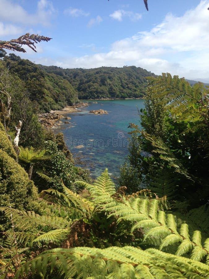 Praia em Stewart Island foto de stock