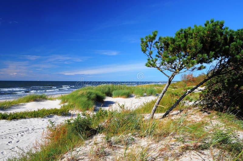 Praia ensolarada do mar Báltico imagens de stock royalty free